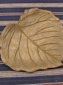 キウイの葉